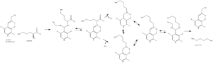 Ornithine decarboxylase - Hypothesized ornithine decarboxylase mechanism.