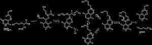 Ornithine decarboxylase - Hypothesized ornithine decarboxylase mechanism.