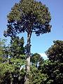 Orto botanico di Napoli 25.jpg