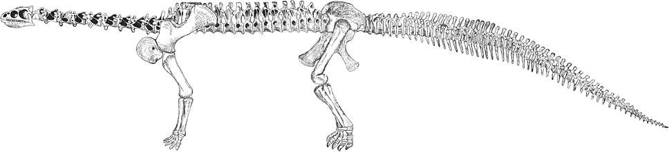 OsbornMook1921-plate-LXXXII-ryder-camarasaurus