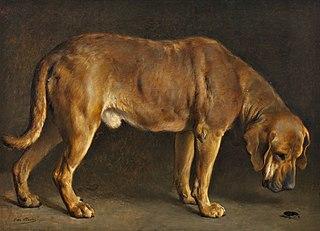 En broholmerhund ser på en eghjort