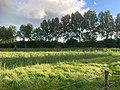 Oude Roode Haan, Groningen, Dal van de Hunze, Euvelgunne, Stainkoelen.jpeg