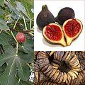 Owoce Figa.jpg