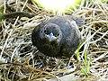 Pássaro 5 - panoramio.jpg