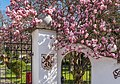 Pörtschach Leonsteinerstraße 1 Schloss Leonstein Gartentor und Magnolie 07042019 6357.jpg