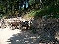 Příchovice, U Čápa, vozík.jpg
