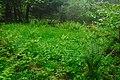 Přírodní rezervace Biely vrch, okres Ilava (02).jpg
