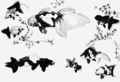 PSM V67 D388 Varieties of gold fish from japanese paintings.png