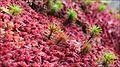 Papuk's red carpet.jpg
