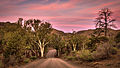 Parachilna Gorge, Flinders Ranges - South Australia.jpg
