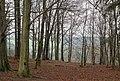Parc naturel des deux Ourthes (DSC 0277).jpg