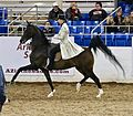 Park horse Scottsdale 2017 12.jpg