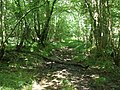 Path, through Grange Wood - geograph.org.uk - 1376516.jpg