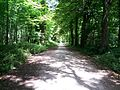 Path in the Bois de Vincennes under the summer sun.jpg