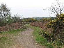 Путь через Келлинг-Хит - geograph.org.uk - 1249409.jpg