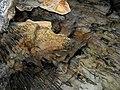 Pećina Banja Stijena12.jpg