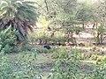 Peacock image - Van Vihar National Park.jpg