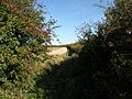 Peeping through a hedgerow to see another hedgerow - geograph.org.uk - 999057.jpg