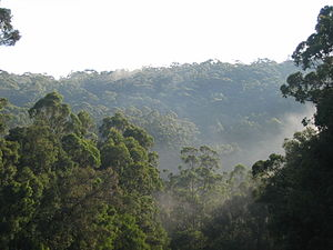 Warren (biogeographic region) - Karri forest near Pemberton, showing typical hilly topography.