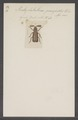 Pentaplatarthrus - Print - Iconographia Zoologica - Special Collections University of Amsterdam - UBAINV0274 015 12 0004.tif