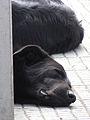 Perros durmiendo (11001786953).jpg