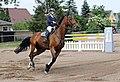 Pferdesportveranstaltung in Seifersdorf (Jahnsdorf) ..2H1A8475WI.jpg