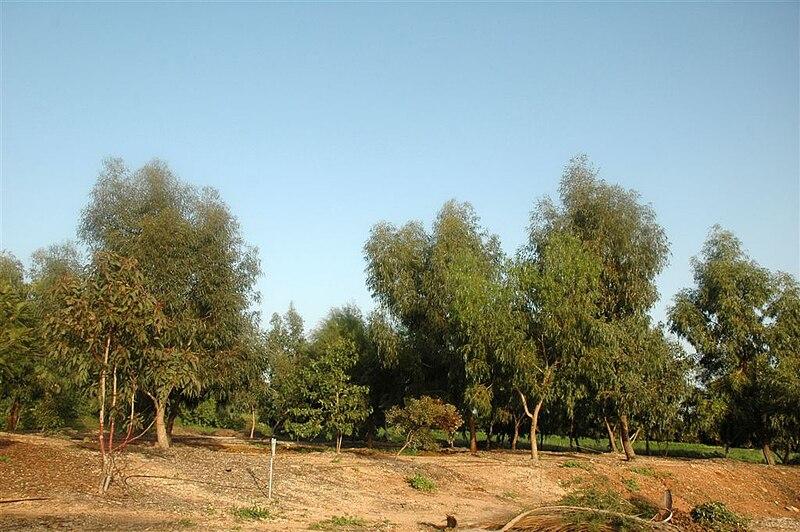 חורשת עצים