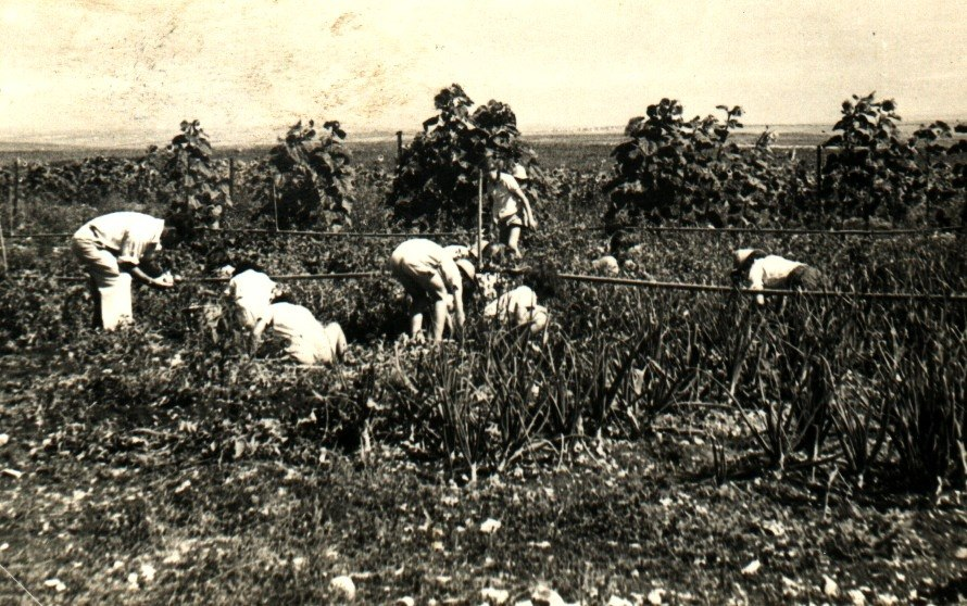 PikiWiki Israel 12647 Child labor