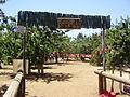 PikiWiki Israel 20219 Golan Bustan (garden) near Kibbutz Ein Zivan Gol.JPG
