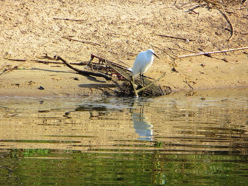 הירקון - שבע טחנות -  עופות באגם