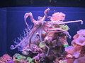 PikiWiki Israel 41807 Octopus.JPG