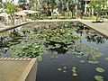 PikiWiki Israel 47471 Nymphaea pond in Sarona.JPG