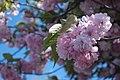 Pink - Flickr - noahg..jpg