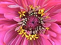 Pink Flower With Details (133618021).jpeg