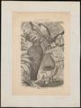 Ploceus hypoxanthus - 1700-1880 - Print - Iconographia Zoologica - Special Collections University of Amsterdam - UBA01 IZ15900045.tif