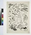 Poissons, oiseaux, poussin (NYPL b14506646-1149360).tiff