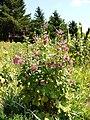 Poltava Botanical Garden (169).jpg