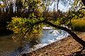Pond in Volgograd Oblast 002.jpg