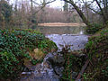 Pond near New Place - geograph.org.uk - 297227.jpg