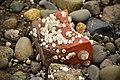 Port Orchard, WA - Harper Park - barnacled brick 02.jpg