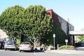 Port Townsend - Leader Building 01.jpg