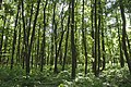 Praha, Kunratice, mladé stromy.jpg