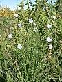 Prairie Flowers (08503cec-e6c7-4228-a44f-487554735604).jpg