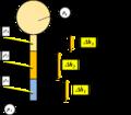 Presion en un punto como suma de cabezales 1.png