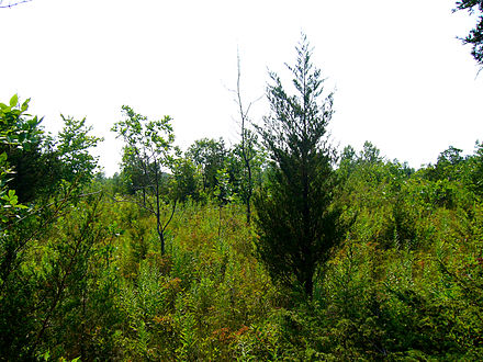 Shrubland in Prince Edward County, Ontario. Prince Edward County Bird Observatory Scrubland.JPG