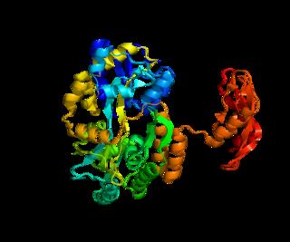 Corticotropin-releasing hormone receptor 1