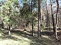Puszcza Dulowska - panoramio (4).jpg