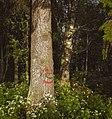 Puu Hietalahden rannasta.jpg