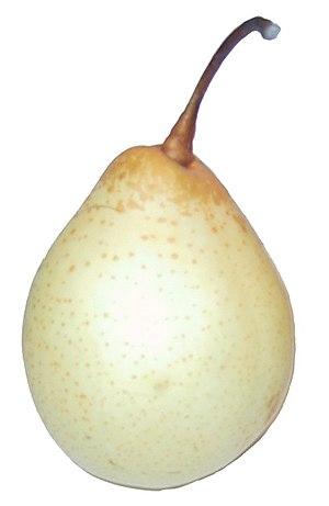 Pyrus × bretschneideri - Image: Pyrus bretschneideri (Nashi)