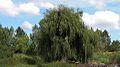 Quinta da Fonte Branca2.jpg
